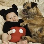 Border Terriers and kids are a great combination